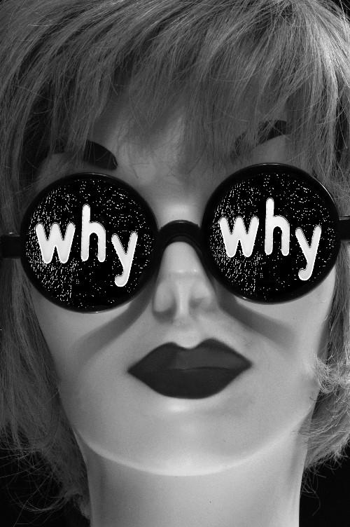 Why - Photo by Lorri Freedman